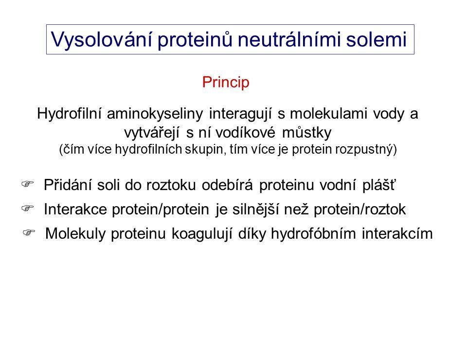 Vysolování proteinů neutrálními solemi Princip Hydrofilní aminokyseliny interagují s molekulami vody a vytvářejí s ní vodíkové můstky (čím více hydrofilních skupin, tím více je protein rozpustný)  Přidání soli do roztoku odebírá proteinu vodní plášť  Interakce protein/protein je silnější než protein/roztok  Molekuly proteinu koagulují díky hydrofóbním interakcím