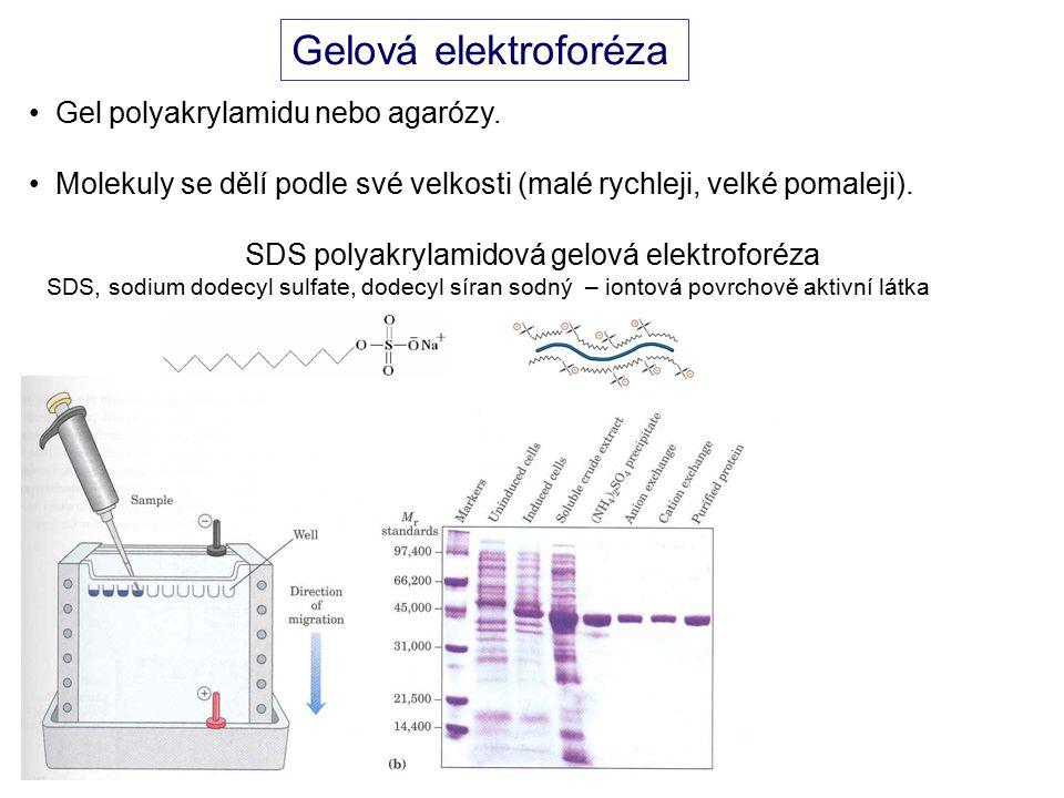 Gelová elektroforéza Gel polyakrylamidu nebo agarózy.