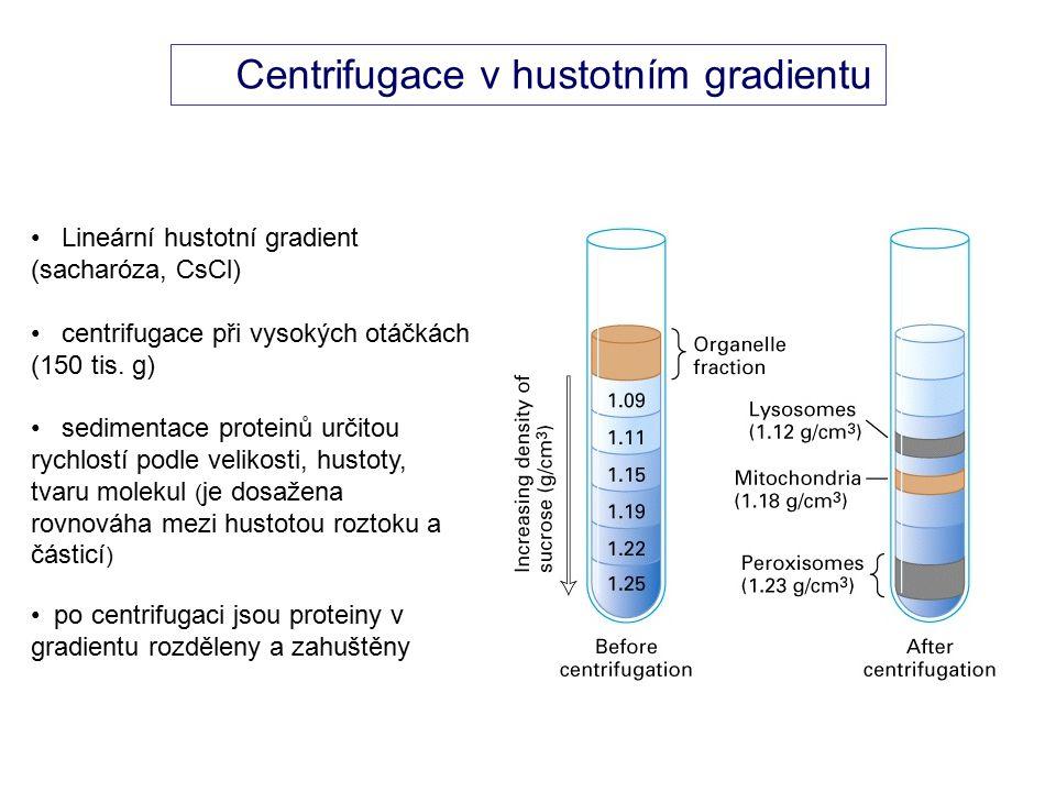 Centrifugace v hustotním gradientu Lineární hustotní gradient (sacharóza, CsCl) centrifugace při vysokých otáčkách (150 tis.