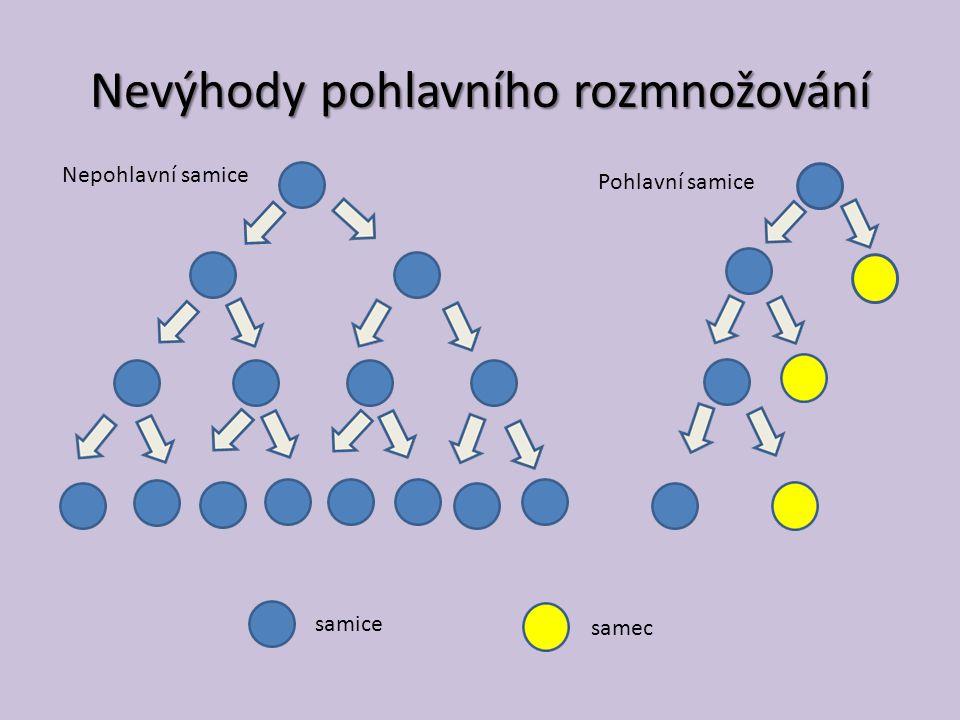 Nevýhody pohlavního rozmnožování Nepohlavní samice Pohlavní samice samice samec