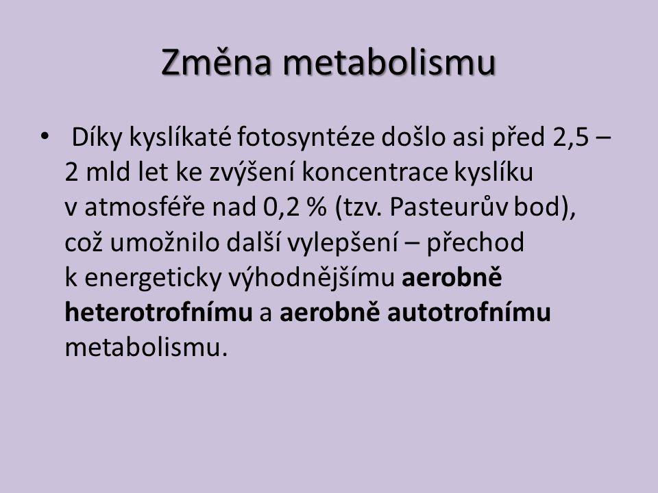 Změna metabolismu Díky kyslíkaté fotosyntéze došlo asi před 2,5 – 2 mld let ke zvýšení koncentrace kyslíku v atmosféře nad 0,2 % (tzv.