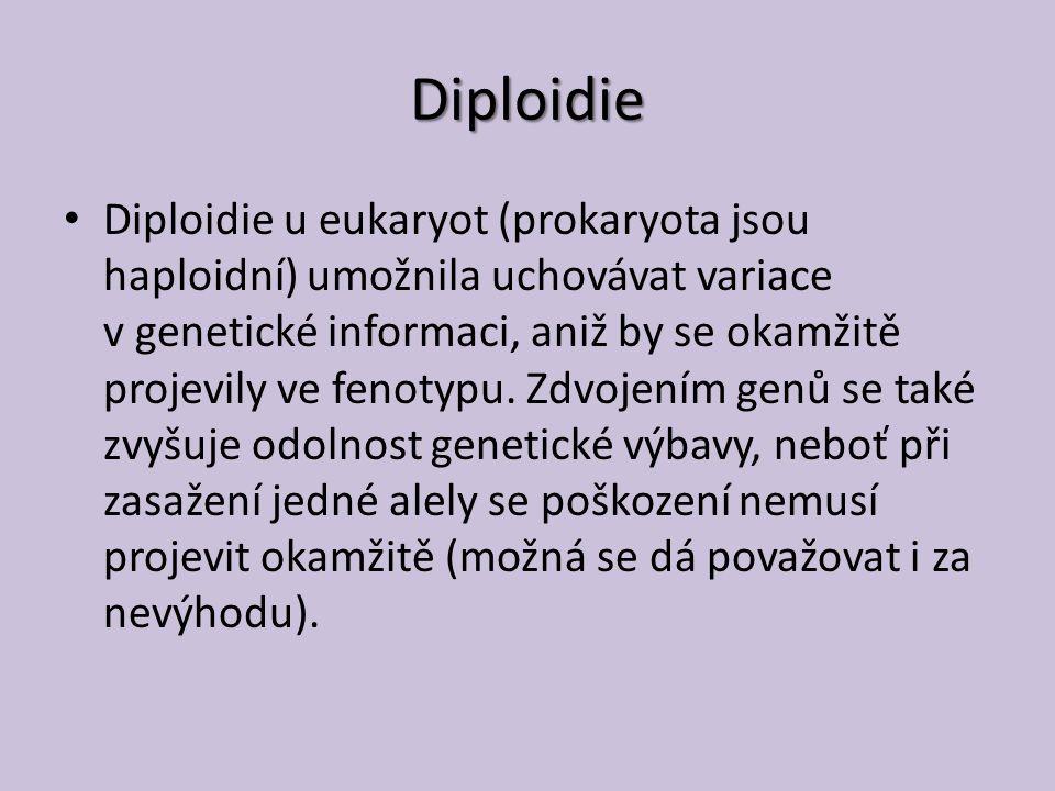 Diploidie Diploidie u eukaryot (prokaryota jsou haploidní) umožnila uchovávat variace v genetické informaci, aniž by se okamžitě projevily ve fenotypu.