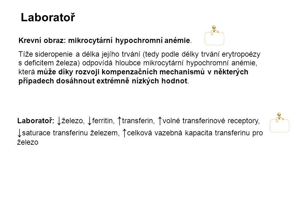 Laboratoř Krevní obraz: mikrocytární hypochromní anémie.