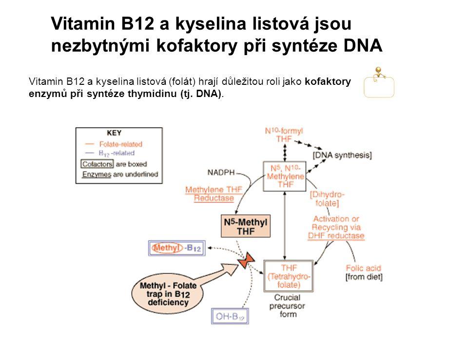 Vitamin B12 a kyselina listová jsou nezbytnými kofaktory při syntéze DNA Vitamin B12 a kyselina listová (folát) hrají důležitou roli jako kofaktory enzymů při syntéze thymidinu (tj.