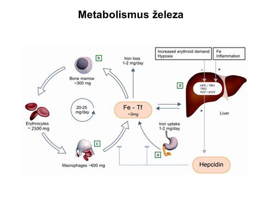 Hepcidin nedostatek železa Erythroidní hyperplazie s neefektivní erytropoézou hypoxienadbytek železa Infekce / systémová zánětlivá odpověď HEPCIDIN Hereditární hemochromatóza