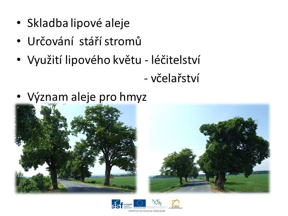 Skladba lipové aleje Určování stáří stromů Využití lipového květu - léčitelství - včelařství Význam aleje pro hmyz