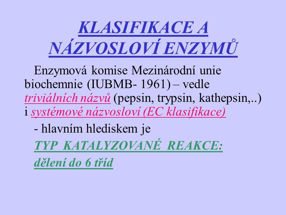 KLASIFIKACE A NÁZVOSLOVÍ ENZYMŮ Enzymová komise Mezinárodní unie biochemnie (IUBMB- 1961) – vedle triviálních názvů (pepsin, trypsin, kathepsin,..) i