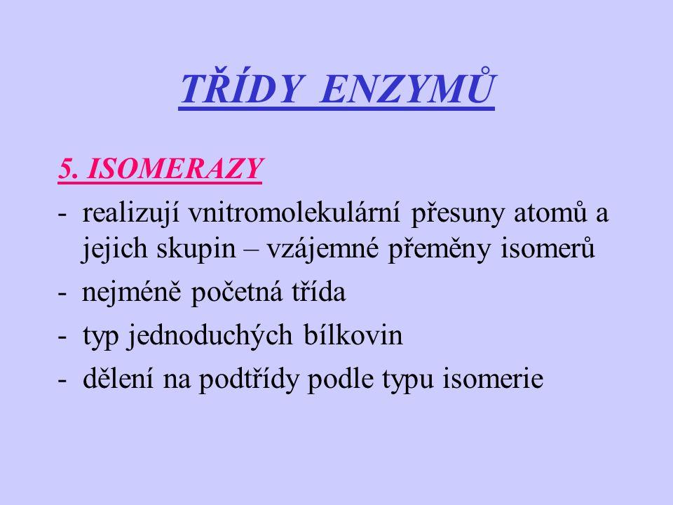 TŘÍDY ENZYMŮ 5. ISOMERAZY -realizují vnitromolekulární přesuny atomů a jejich skupin – vzájemné přeměny isomerů - nejméně početná třída -typ jednoduch