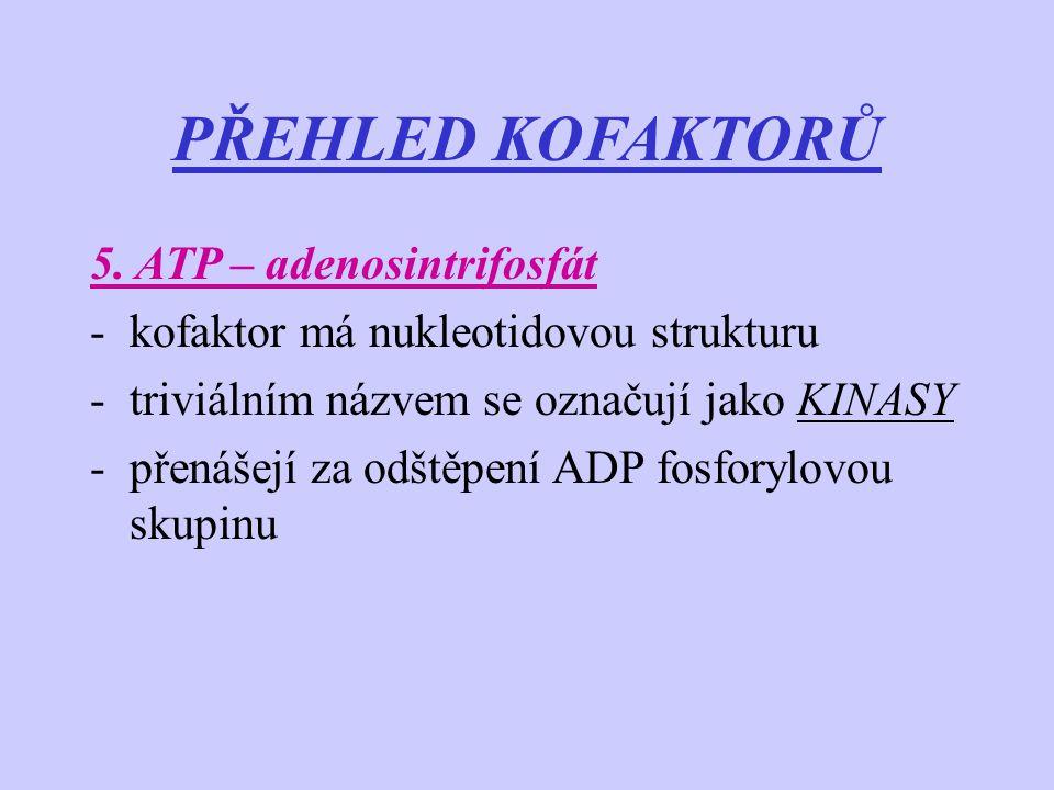 PŘEHLED KOFAKTORŮ 5. ATP – adenosintrifosfát -kofaktor má nukleotidovou strukturu -triviálním názvem se označují jako KINASY -přenášejí za odštěpení A