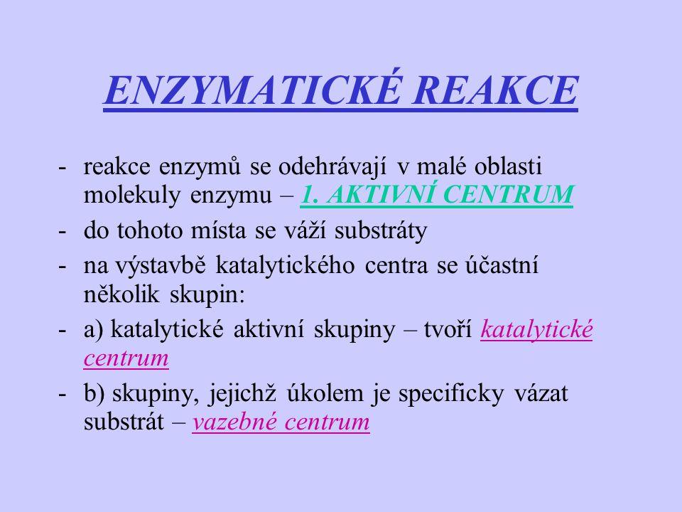 ENZYMATICKÉ REAKCE -reakce enzymů se odehrávají v malé oblasti molekuly enzymu – 1. AKTIVNÍ CENTRUM -do tohoto místa se váží substráty -na výstavbě ka