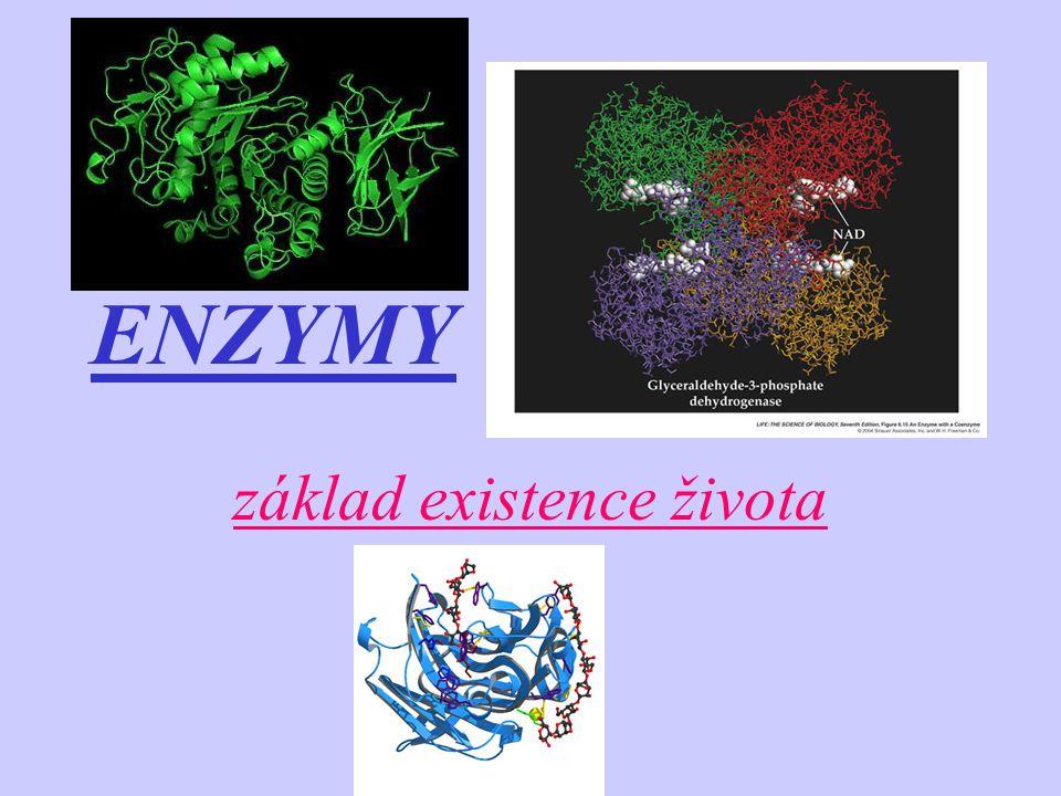 ENZYMATICKÉ REAKCE c) další skupiny, které tvoří vhodné chemické prostředí v centru a vhodnou prostorovou strukturu Vedle aktivního centra jsou v molekule enzymů další významné oblasti pro funkci těchto biokatalyzátorů – tyto oblasti – 2.