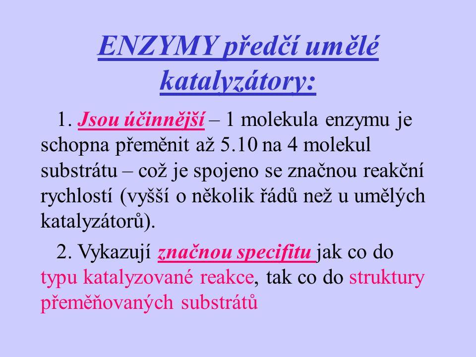 MECHANISMUS ÚČINKU ENZYMŮ Názory na mechanismus účinků enzymů vychází ze dvou představ: 1.