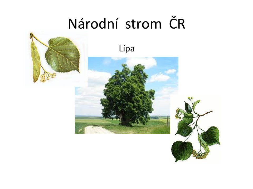 Národní strom ČR Lípa