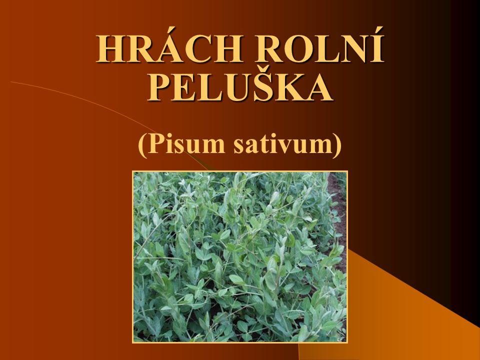 HRÁCH ROLNÍ PELUŠKA (Pisum sativum)