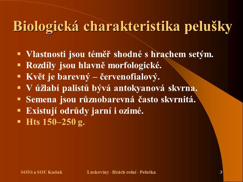 SOŠS a SOU KadaňLuskoviny - Hrách rolní - Peluška3 Biologická charakteristika pelušky  Vlastnosti jsou téměř shodné s hrachem setým.