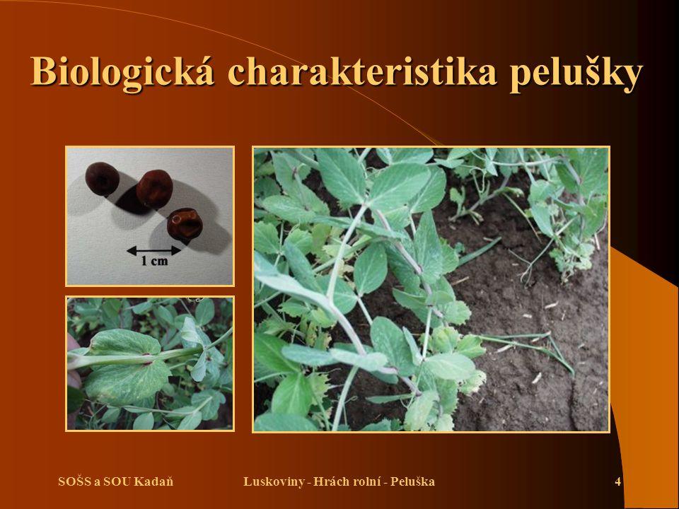 SOŠS a SOU KadaňLuskoviny - Hrách rolní - Peluška4 Biologická charakteristika pelušky