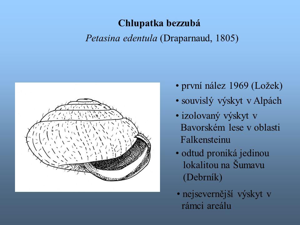 Chlupatka bezzubá Petasina edentula (Draparnaud, 1805) souvislý výskyt v Alpách izolovaný výskyt v Bavorském lese v oblasti Falkensteinu odtud proniká jedinou lokalitou na Šumavu (Debrník) nejsevernější výskyt v rámci areálu první nález 1969 (Ložek)