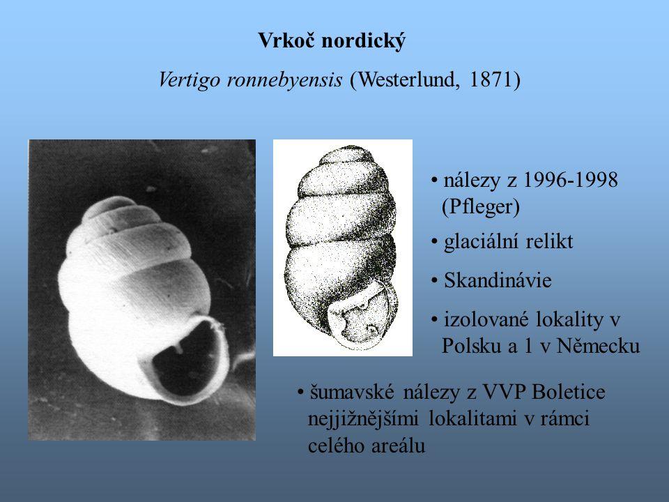 Vrkoč nordický Vertigo ronnebyensis (Westerlund, 1871) glaciální relikt Skandinávie izolované lokality v Polsku a 1 v Německu šumavské nálezy z VVP Boletice nejjižnějšími lokalitami v rámci celého areálu nálezy z 1996-1998 (Pfleger)