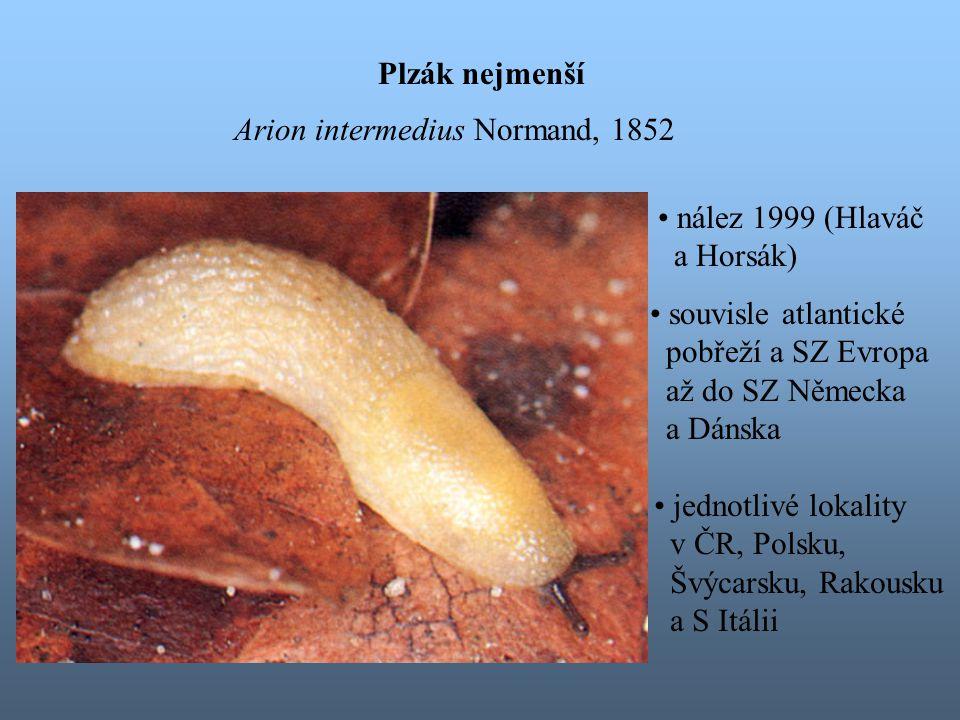 Plzák nejmenší Arion intermedius Normand, 1852 souvisle atlantické pobřeží a SZ Evropa až do SZ Německa a Dánska jednotlivé lokality v ČR, Polsku, Švýcarsku, Rakousku a S Itálii nález 1999 (Hlaváč a Horsák)