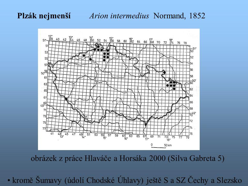 kromě Šumavy (údolí Chodské Úhlavy) ještě S a SZ Čechy a Slezsko obrázek z práce Hlaváče a Horsáka 2000 (Silva Gabreta 5) Plzák nejmenšíArion intermedius Normand, 1852