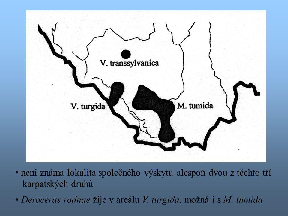 není známa lokalita společného výskytu alespoň dvou z těchto tří karpatských druhů Deroceras rodnae žije v areálu V. turgida, možná i s M. tumida