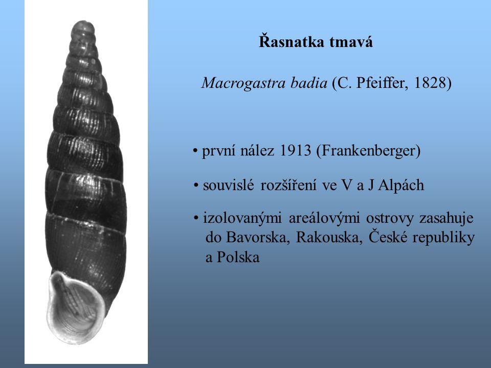 Řasnatka tmavá Macrogastra badia (C.