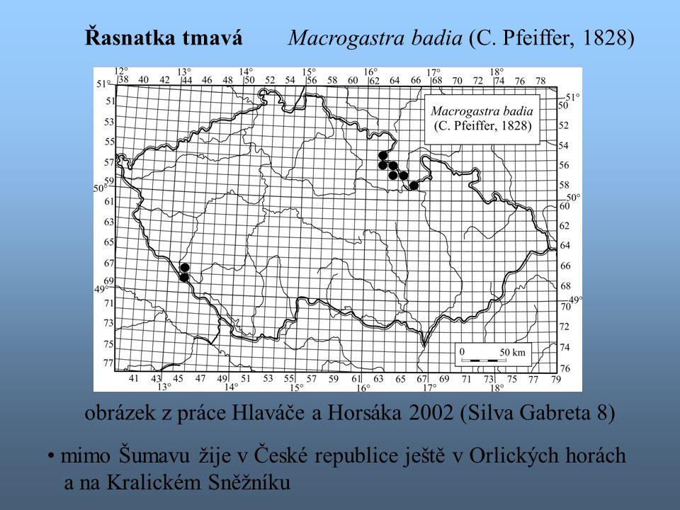 mimo Šumavu žije v České republice ještě v Orlických horách a na Kralickém Sněžníku obrázek z práce Hlaváče a Horsáka 2002 (Silva Gabreta 8) Macrogastra badia (C.