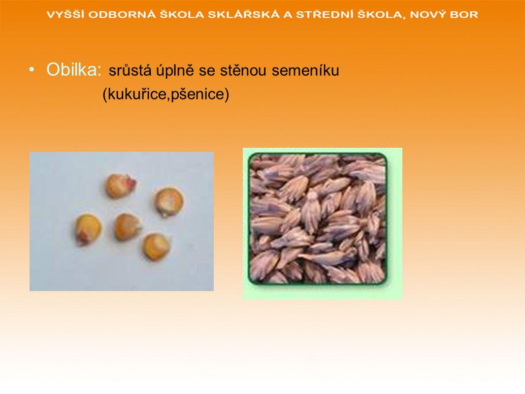 Obilka: srůstá úplně se stěnou semeníku (kukuřice,pšenice)