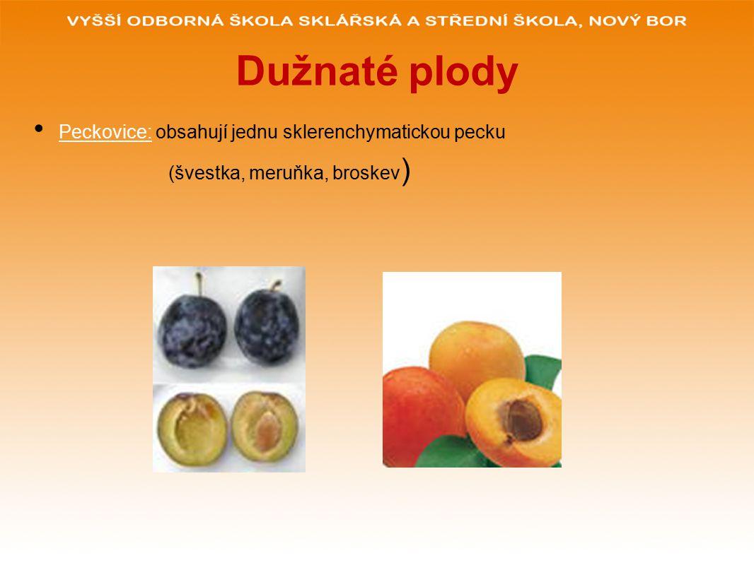 Dužnaté plody Peckovice: obsahují jednu sklerenchymatickou pecku (švestka, meruňka, broskev )