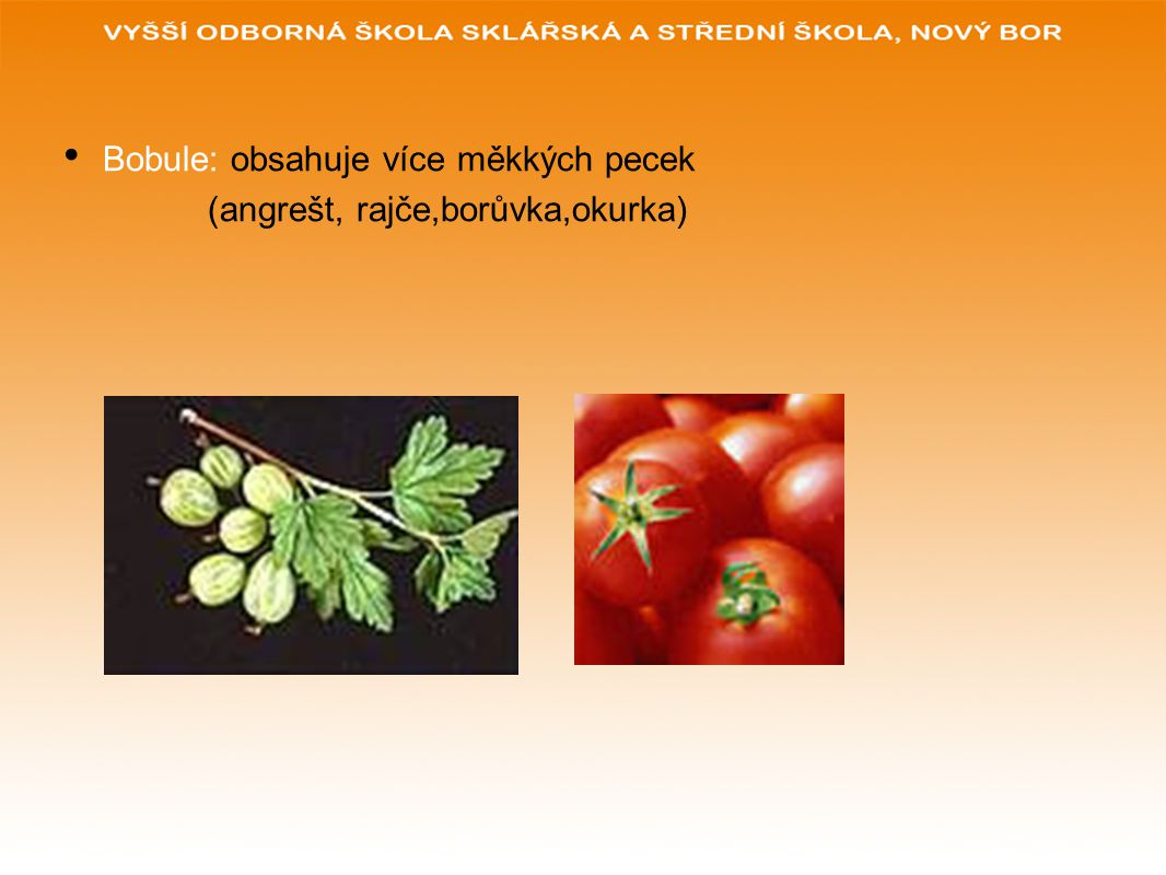 Bobule: obsahuje více měkkých pecek (angrešt, rajče,borůvka,okurka)
