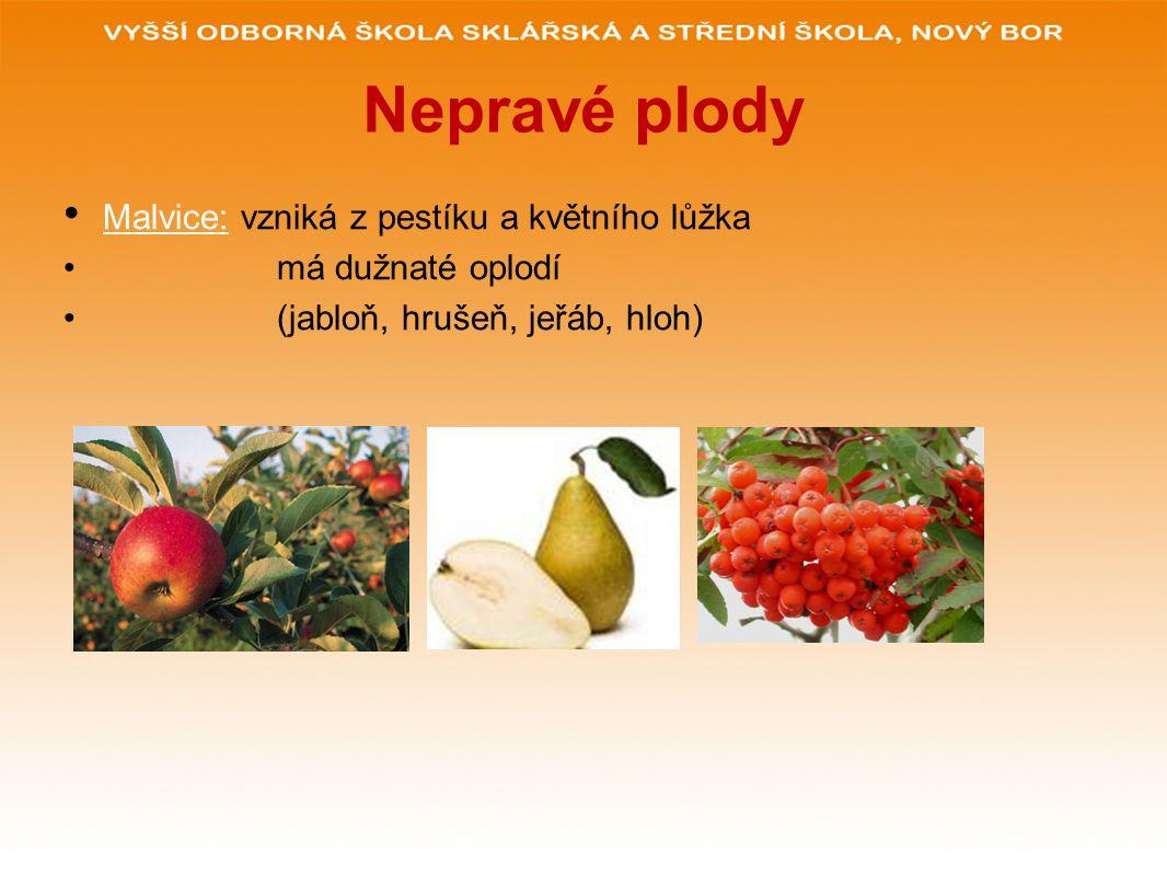 Nepravé plody Malvice: vzniká z pestíku a květního lůžka má dužnaté oplodí (jabloň, hrušeň, jeřáb, hloh)