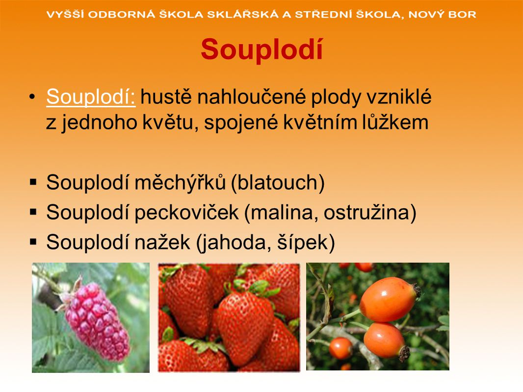 Souplodí Souplodí: hustě nahloučené plody vzniklé z jednoho květu, spojené květním lůžkem  Souplodí měchýřků (blatouch)  Souplodí peckoviček (malina