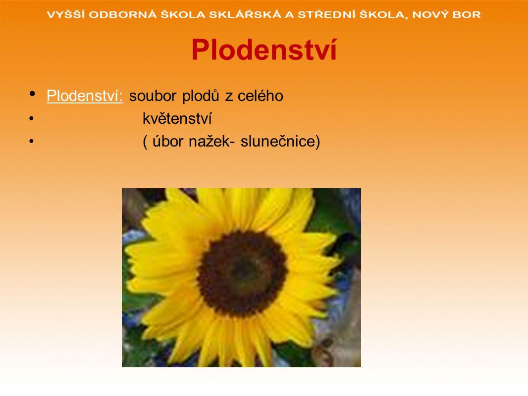 Plodenství Plodenství: soubor plodů z celého květenství ( úbor nažek- slunečnice)