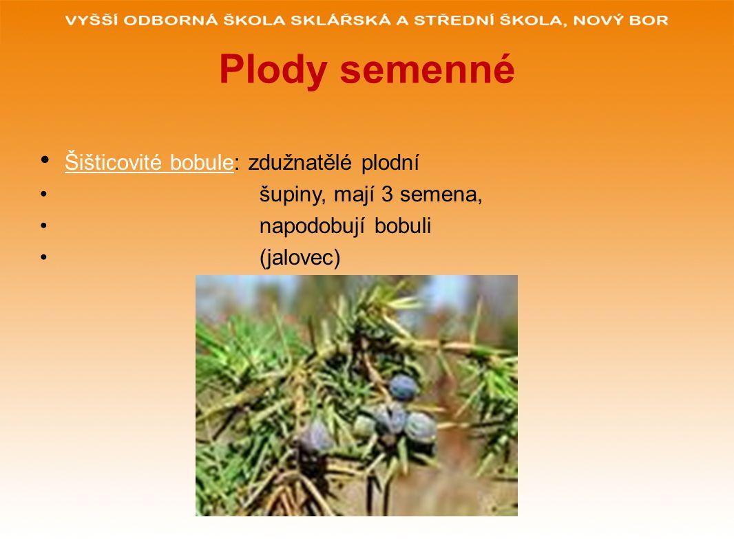 Plody semenné Šišticovité bobule: zdužnatělé plodní šupiny, mají 3 semena, napodobují bobuli (jalovec)