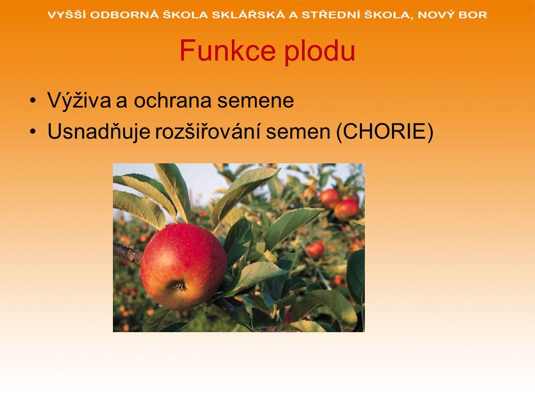 Funkce plodu Výživa a ochrana semene Usnadňuje rozšiřování semen (CHORIE)