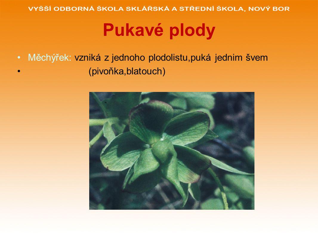 Pukavé plody Měchýřek: vzniká z jednoho plodolistu,puká jednim švem (pivoňka,blatouch)