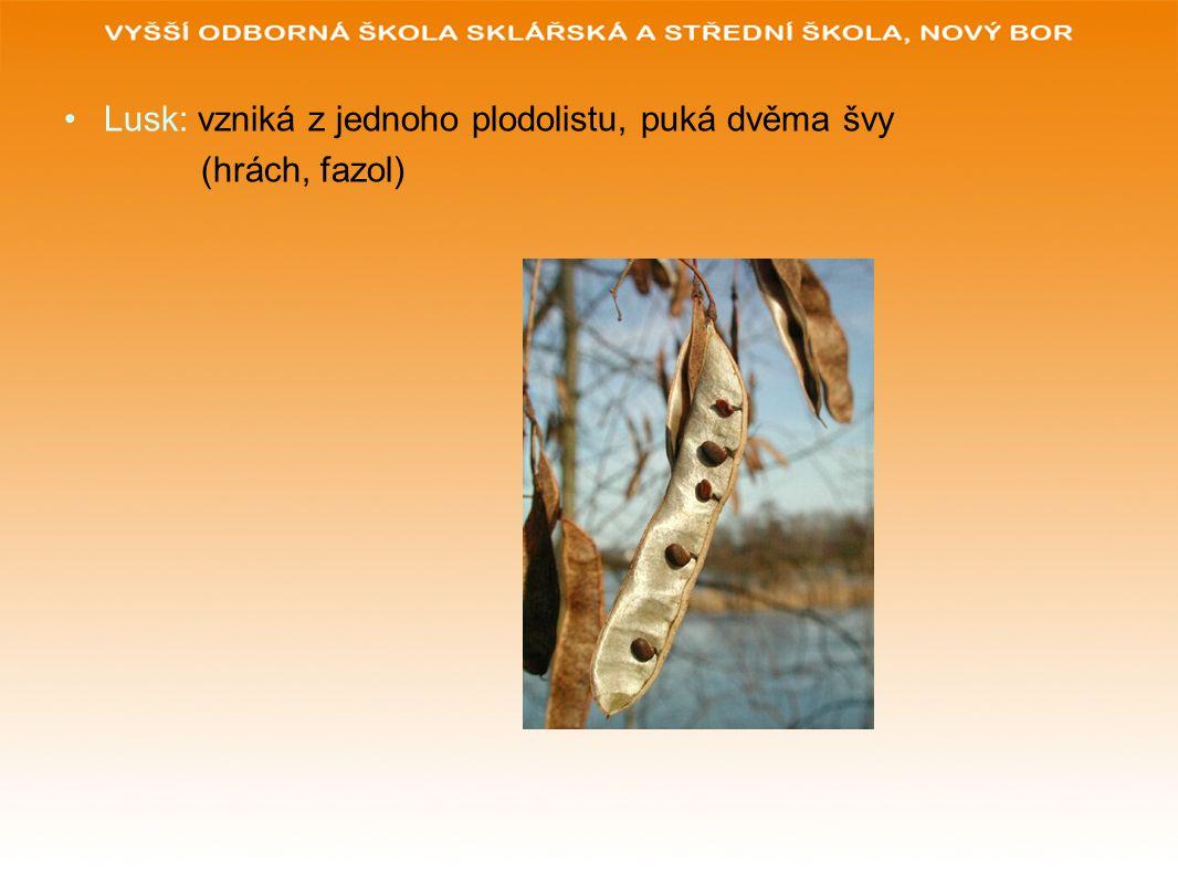 Lusk: vzniká z jednoho plodolistu, puká dvěma švy (hrách, fazol)