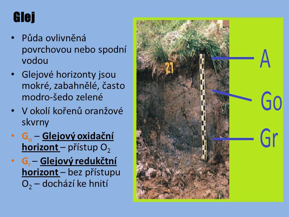 Glej Půda ovlivněná povrchovou nebo spodní vodou Glejové horizonty jsou mokré, zabahnělé, často modro-šedo zelené V okolí kořenů oranžové skvrny G o – Glejový oxidační horizont – přístup O 2 G r – Glejový redukčtní horizont – bez přístupu O 2 – dochází ke hnití