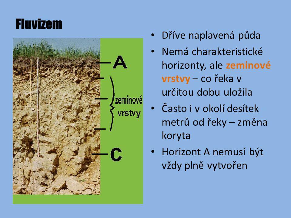 Fluvizem Dříve naplavená půda Nemá charakteristické horizonty, ale zeminové vrstvy – co řeka v určitou dobu uložila Často i v okolí desítek metrů od řeky – změna koryta Horizont A nemusí být vždy plně vytvořen