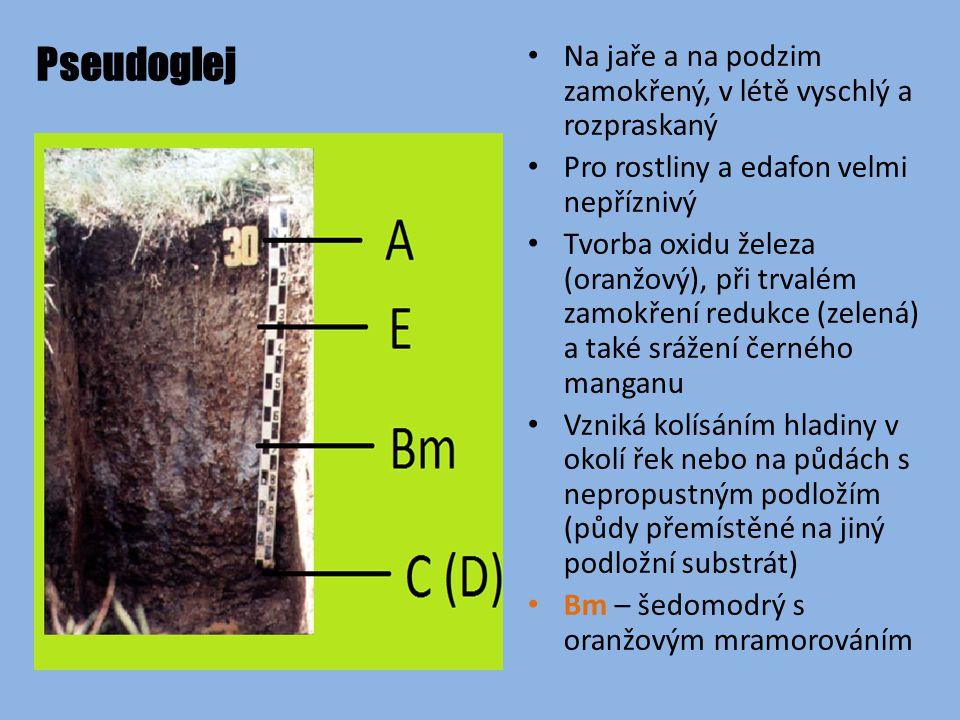 Pseudoglej Na jaře a na podzim zamokřený, v létě vyschlý a rozpraskaný Pro rostliny a edafon velmi nepříznivý Tvorba oxidu železa (oranžový), při trvalém zamokření redukce (zelená) a také srážení černého manganu Vzniká kolísáním hladiny v okolí řek nebo na půdách s nepropustným podložím (půdy přemístěné na jiný podložní substrát) Bm – šedomodrý s oranžovým mramorováním