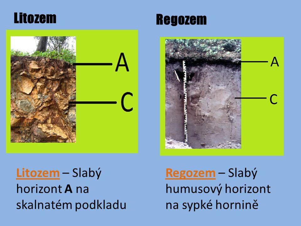 Litozem Regozem Litozem – Slabý horizont A na skalnatém podkladu Regozem – Slabý humusový horizont na sypké hornině