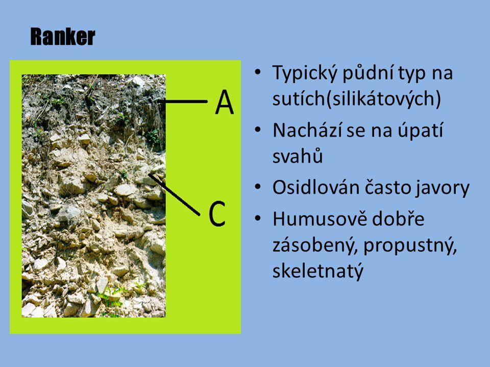 Ranker Typický půdní typ na sutích(silikátových) Nachází se na úpatí svahů Osidlován často javory Humusově dobře zásobený, propustný, skeletnatý