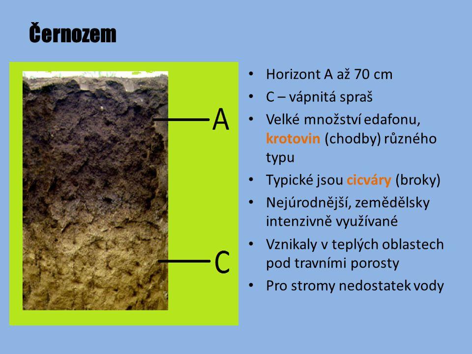 Černozem Horizont A až 70 cm C – vápnitá spraš Velké množství edafonu, krotovin (chodby) různého typu Typické jsou cicváry (broky) Nejúrodnější, zemědělsky intenzivně využívané Vznikaly v teplých oblastech pod travními porosty Pro stromy nedostatek vody