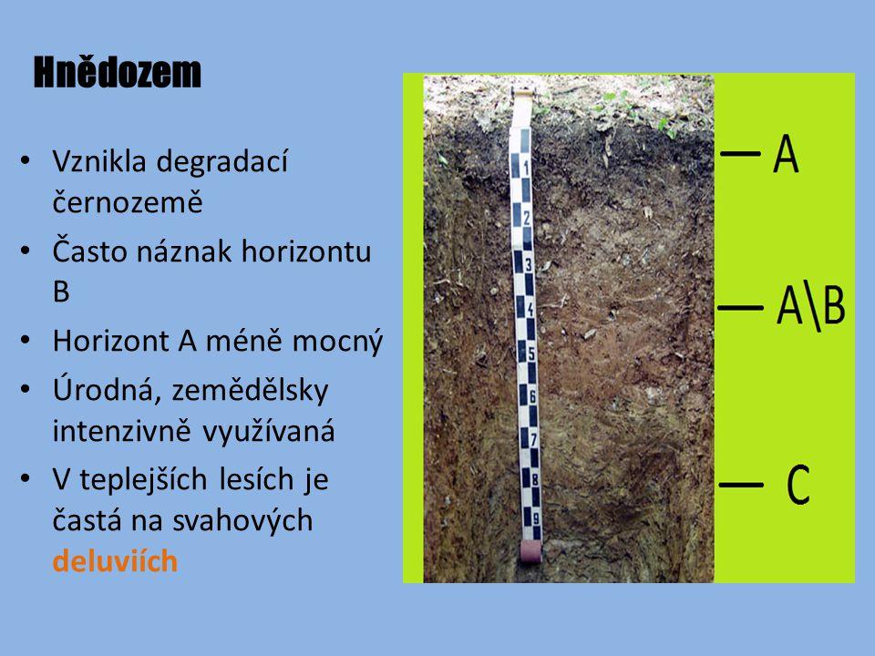 Hnědozem Vznikla degradací černozemě Často náznak horizontu B Horizont A méně mocný Úrodná, zemědělsky intenzivně využívaná V teplejších lesích je častá na svahových deluviích