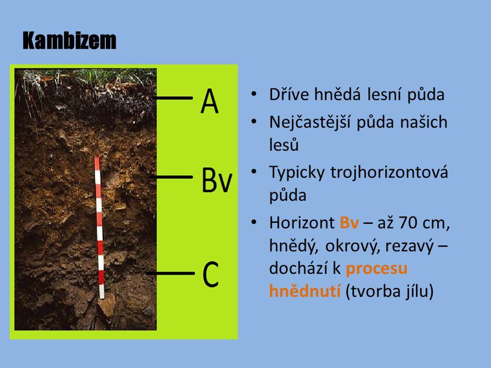 Kambizem Dříve hnědá lesní půda Nejčastější půda našich lesů Typicky trojhorizontová půda Horizont Bv – až 70 cm, hnědý, okrový, rezavý – dochází k procesu hnědnutí (tvorba jílu)