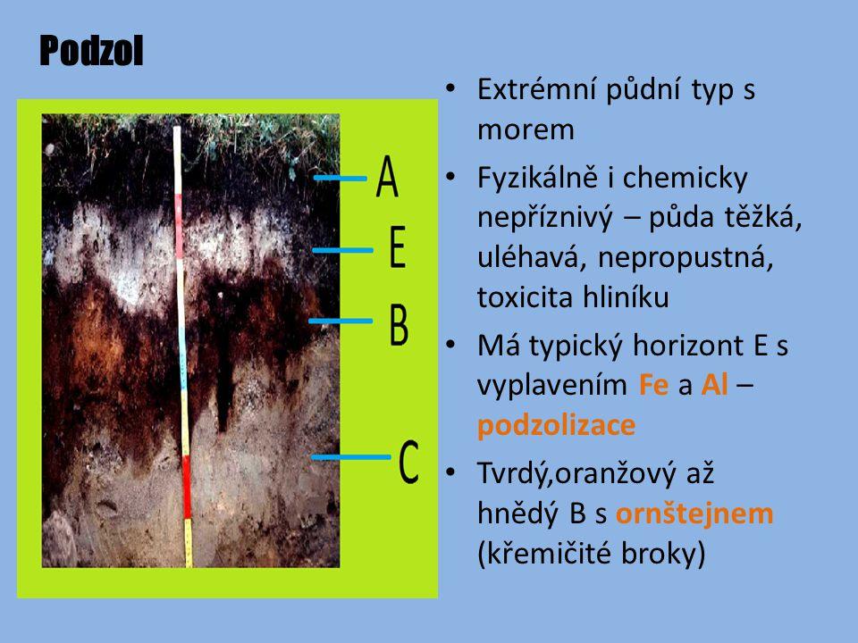 Podzol Extrémní půdní typ s morem Fyzikálně i chemicky nepříznivý – půda těžká, uléhavá, nepropustná, toxicita hliníku Má typický horizont E s vyplavením Fe a Al – podzolizace Tvrdý,oranžový až hnědý B s ornštejnem (křemičité broky)