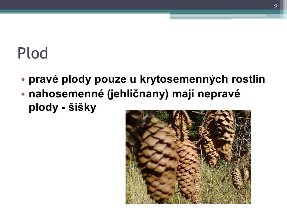 Plod pravé plody pouze u krytosemenných rostlin nahosemenné (jehličnany) mají nepravé plody - šišky 2