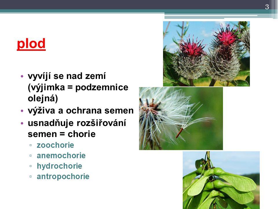 plod vyvíjí se nad zemí (výjimka = podzemnice olejná) výživa a ochrana semen usnadňuje rozšiřování semen = chorie ▫ zoochorie ▫ anemochorie ▫ hydrocho