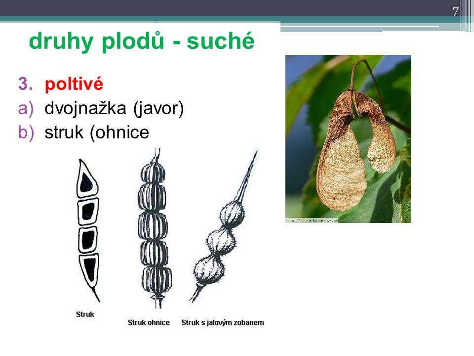 3.poltivé a)dvojnažka (javor) b)struk (ohnice 7 druhy plodů - suché