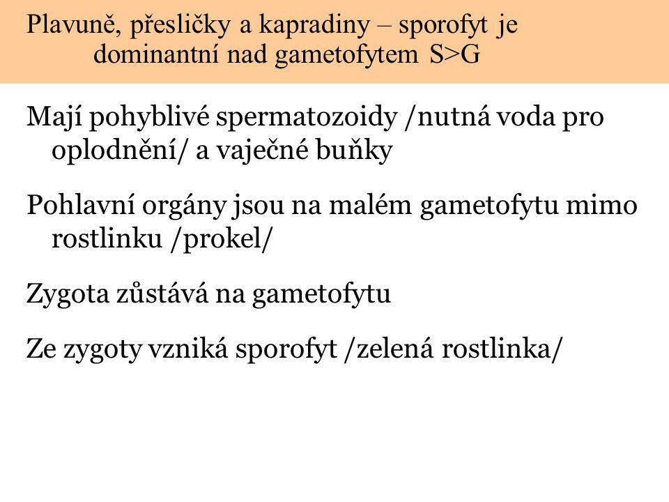 2 3 4 5 Gametofyt (n) Spermatozoidy (n) Vaječná buňka (n) Oplodnění - voda Zygota (2n) Mitóza a vývoj rostlinky Nový sporofyt roste mimo gametofyt Sporofyt (2n) Meióza Výtrusnice 1 Spory (n) Mitóza a vývoj proklu HAPLOIDNÍ DIPLOIDNÍ